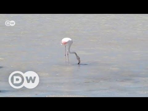 Spanien: Flamingos gegen Massentourismus auf Ibiza  ...