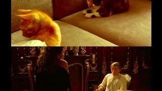 Ticatnic : la vidéo des chats qui rejouent Titanic