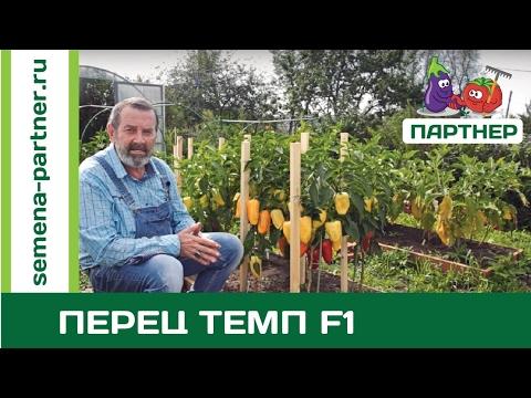 САМЫЙ УРОЖАЙНЫЙ ПЕРЕЦ ТЕМП F1 (видео)
