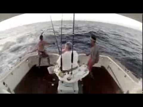 Pescador se joga ao mar, após ser encurralado por marlim