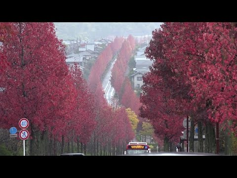 Japan discoveries - Autmun Leaves in Kyoto