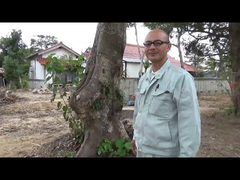 タブノキ 大きな木 メインツリー Takezo・ファーム オリンピック