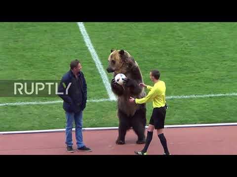 Σάλος στη Ρωσία με την αρκούδα σε ρόλο «οργανωτή κερκίδας»