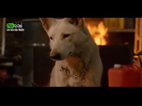 Phim Hay Mới Nhất 2018 l Chó Siêu Đặc Nhiệm - Phim Hành Động Mỹ Hay Nhất - Full TM l PHIM CỦ CHUỐI - Thời lượng: 1:37:17.