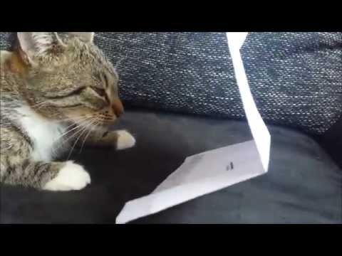 Katze an der Uni