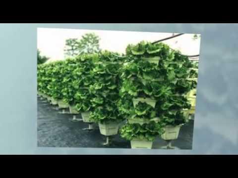 Producción Hidroponica Orgánica Vertical Intensiva