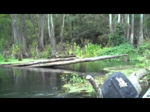 Gainesville Day Trip - Kayaking the Ichetucknee River