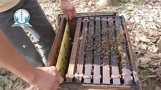 Nông nghiệp: Kỹ thuật nuôi ong nội địa (Apis Cerana) - Phần: Kỹ thuật nuôi ong