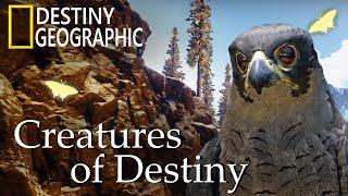 Destiny 2 — игрок снял документальный фильм о природе игры в стиле National Geographic