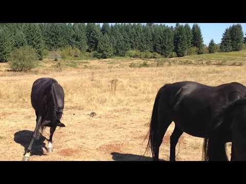 Horseback Riding In Colton Oregon