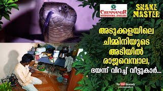 Video King cobra found under chimney in the kitchen, natives become frightened | Snakemaster EP 446 MP3, 3GP, MP4, WEBM, AVI, FLV Maret 2019