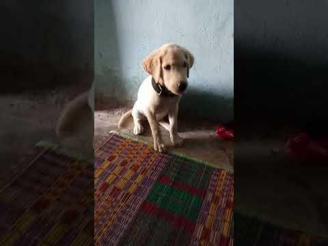 Dog training tamil