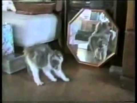 gatti vivaci ed esuberanti