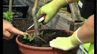 Сад и огород. Сажаем деревья. Закладка сада.