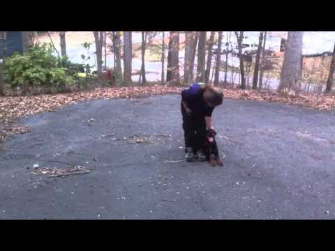 Dora off leash obedience