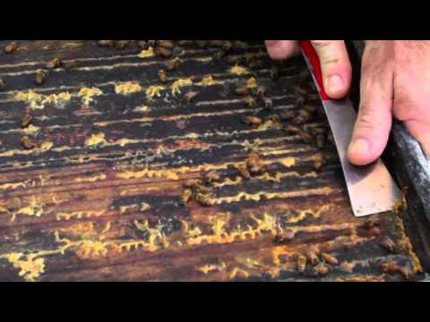 Savannah Bee Company teaches you about Propolis!