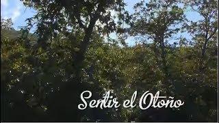 Aracena Spain  city images : Sierra de Aracena y Picos de Aroche, Sentir el Otoño. Huelva