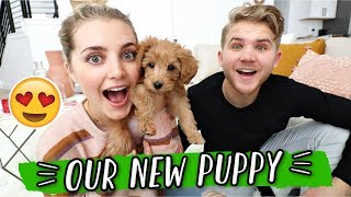 MEET OUR NEW PUPPY!!! VLOGMAS DAY 5 by Aspyn + Parker