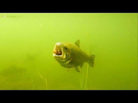 подводные съемки приманок