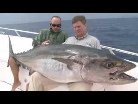 ловля тунца видео бесплатно