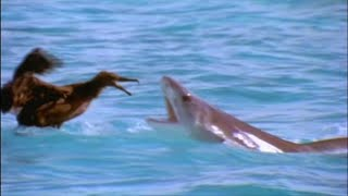 Video Scavengers of the Seas - Documentary MP3, 3GP, MP4, WEBM, AVI, FLV Agustus 2019