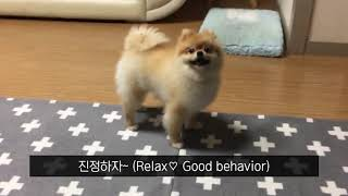 video thumbnail DOCGA natural premium relax spray for nose work with help you and your dog feel calm & relax at home youtube