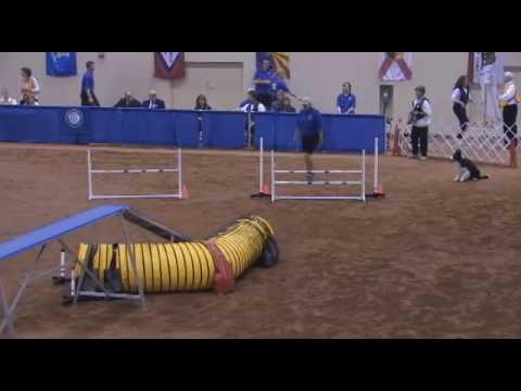 agility - Winners of the 2009 AKC National Agility Championship Two 2008 champions successfully defended their titles as junior handler Daneka Hedges and her Papillon,...
