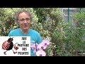 Jardinage:Comment bien entretenir mon orchid�e: Comment faire refleurir ...
