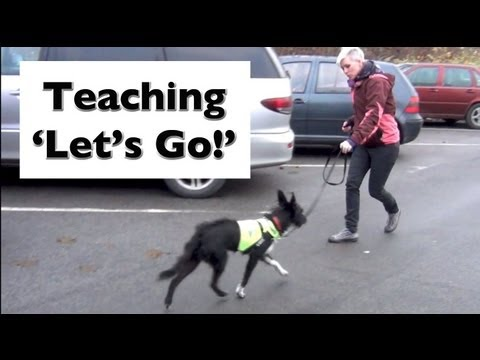 How to stop your dog lunging and barking- Train 'Let's Go!'- shy reactive dogs (видео)