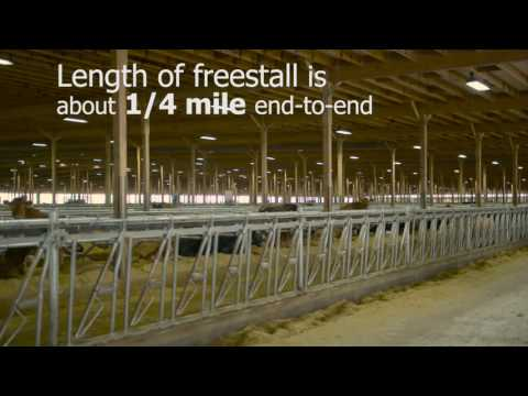 Meadowstar Dairy: Largest Lester Building yet!