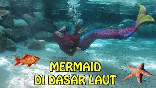 Video WAH ADA MERMAID DI DASAR LAUT. BERENANG SAMA IKAN ASLI 😍 MP3, 3GP, MP4, WEBM, AVI, FLV April 2019