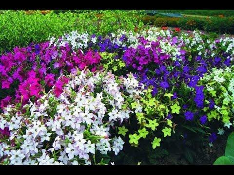 Резеда цветок фото