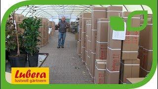 Ein Dankeschön an die Lubera® Kunden