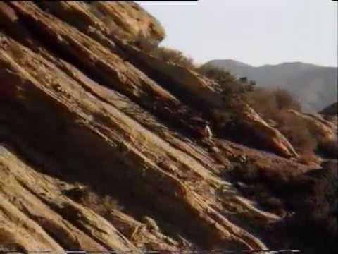 Pustynny jastrząb - Desert Hawk