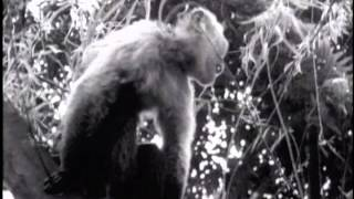 Nonton The Silent War  Colombia S Fight Against Yellow Fever  Documentary Film Productions  1943  Film Subtitle Indonesia Streaming Movie Download
