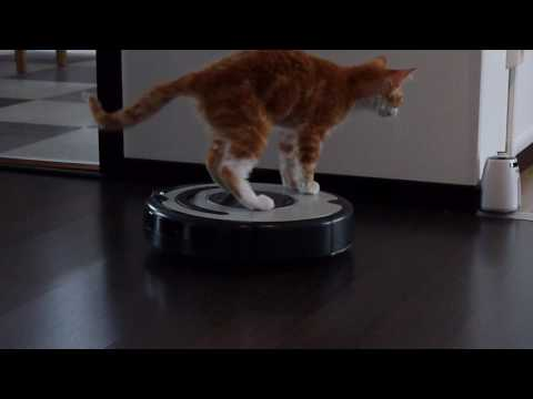 -DeXter- La Perm Captain of the ROOMBA