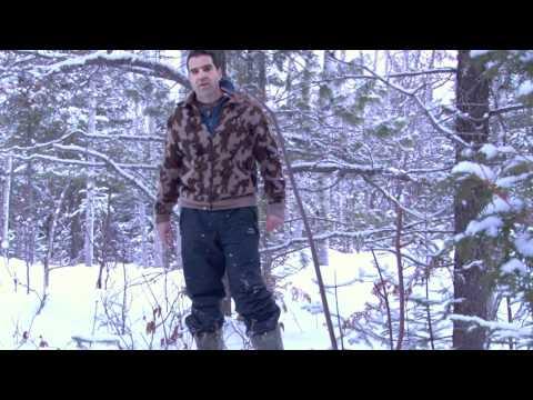 Le comportement des orignaux en forêt pendant l'hiver