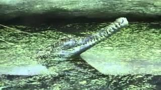 EDU Planeta Záhad 08 Dobře Utajené Příšery 1996
