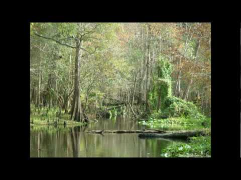Bigfoot Evidence: Introduction   Why Florida? tim fasano research skunk ape video caught on video
