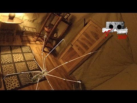 Skräckfilmskväll 21/3: Tema - Insekter och spindlar