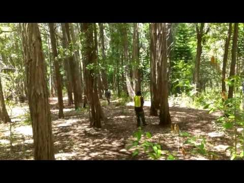 HawaiiPB - Fun in the woods with LTD Paintball. Stock class styles. Raw video from the Evo 4G LTE.