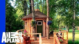 Alaskan Treetop Sauna | Treehouse Masters: Behind the Build by Animal Planet