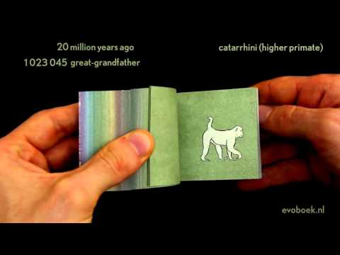 550 million years of evolution in flipbook