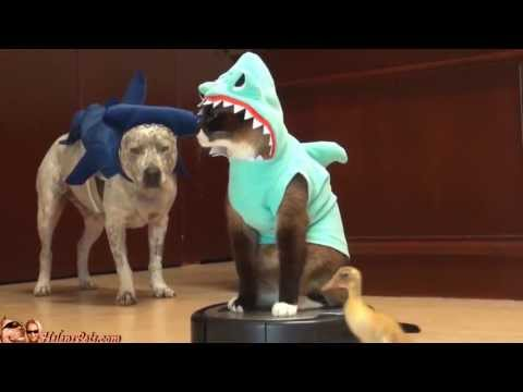 Cat Shark Duck Dog Roomba Drama Awesome