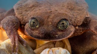 World's Loneliest Frog Might Get A Happy Ending After One New Discovery by Did You Know Animals?