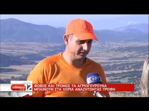 Τροχαίο εξαιτίας αγριογούρουνων στα Τρίκαλα | 22/09/2019 |