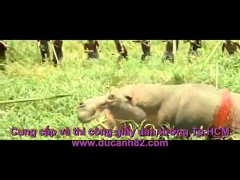 Dã man, Vũ trường trên sa mạc châu phi, thế giới động vật hoang dã - YouTube.flv