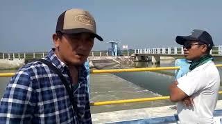 Kelangkaan Air Sawah Indramayu