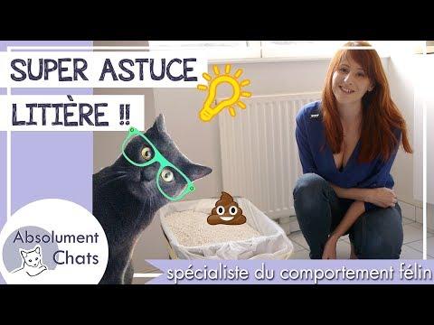 Comment nettoyer la litière du chat: Super ASTUCE ! Comment changer la litière du chat?