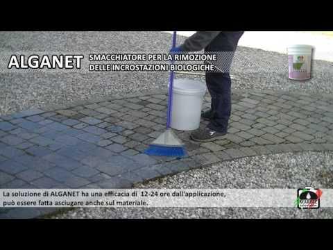 Come pulire i pavimenti e rivestimenti esterni da alghe, muffe, licheni e muschio.